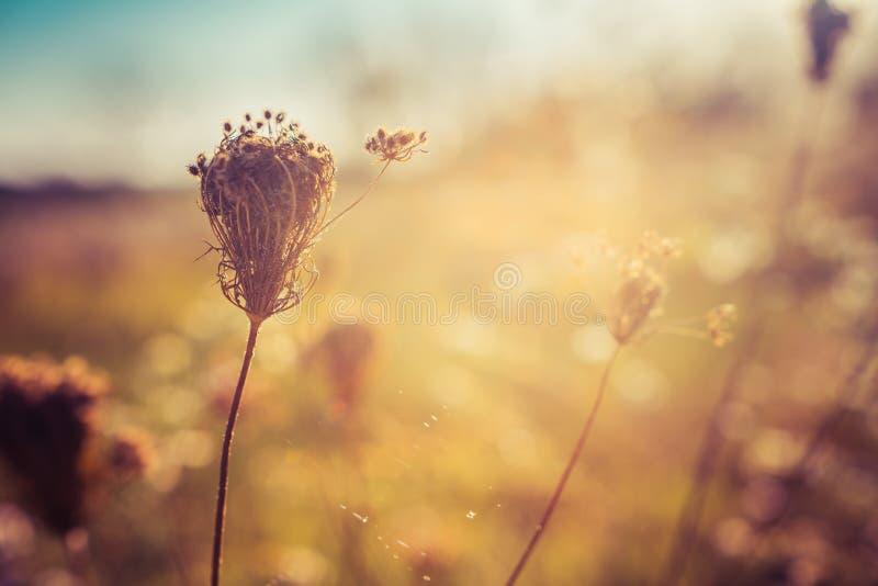 在秋天草甸的野花 选择聚焦 免版税库存照片