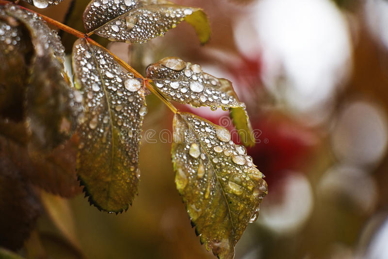 在秋天雨以后 免版税库存照片