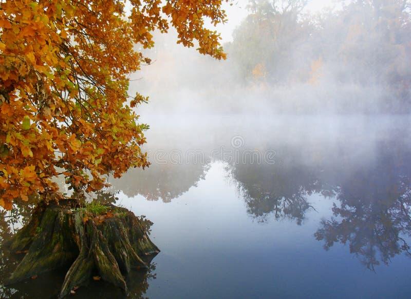在秋天雾湖之上 免版税图库摄影