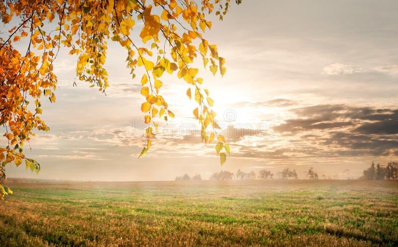 在秋天领域的早晨 免版税图库摄影