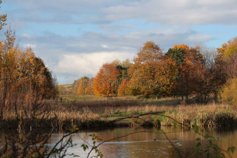 在秋天颜色沐浴的自然保护 免版税库存图片