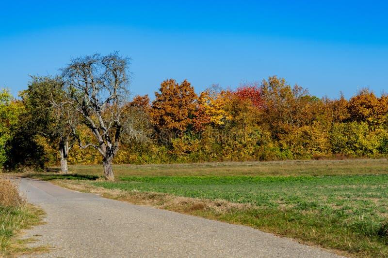 在秋天颜色的树沿远足道路在维斯洛赫,德国 免版税库存照片