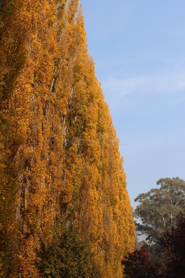 在秋天颜色的树fense 免版税图库摄影