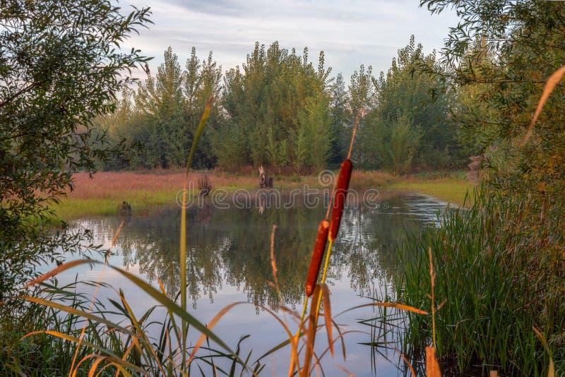 在秋天颜色的荷兰希斯风景 免版税库存图片