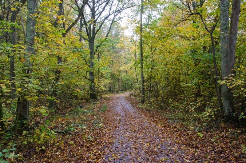 在秋天颜色的被铺的小径 免版税图库摄影