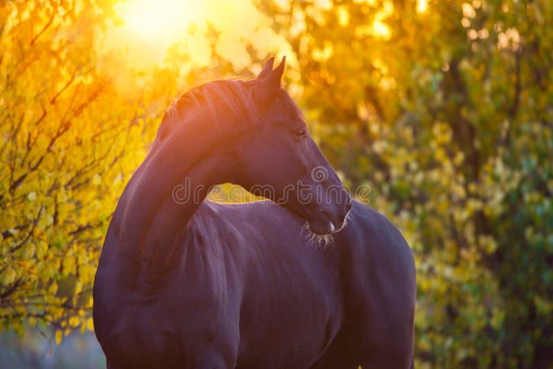 在秋天风景的公马 免版税库存图片