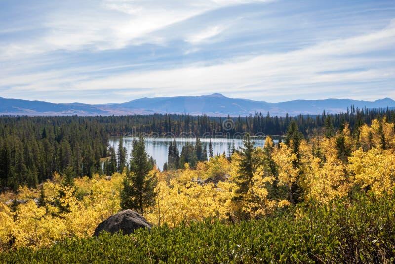 在秋天风景的黄色白杨木 库存照片
