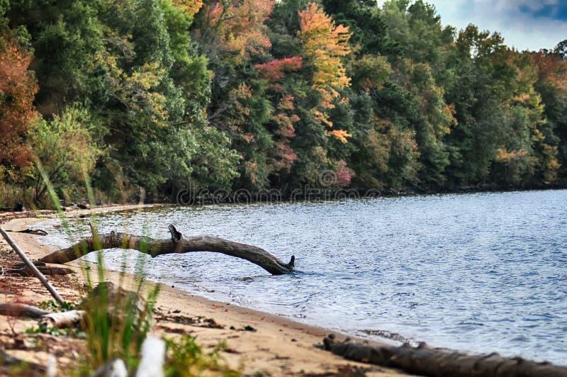 在秋天n耳朵的自然水 库存图片