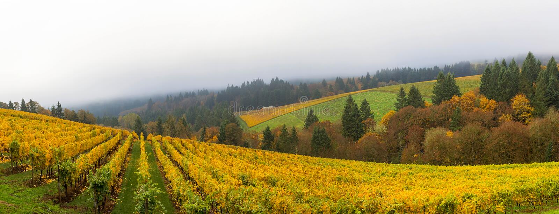在秋季全景期间的邓迪俄勒冈葡萄园 免版税库存图片