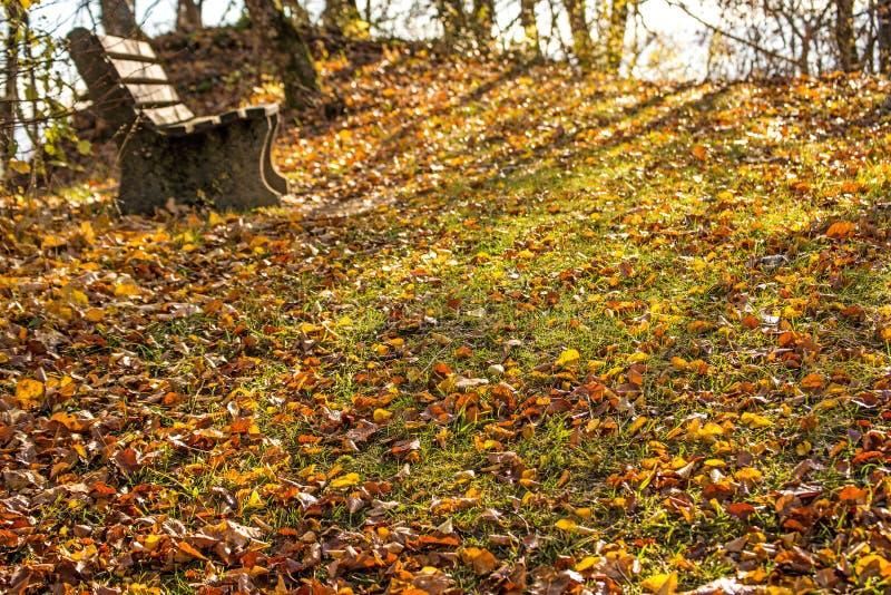 在秋季太阳的公园长椅 库存图片