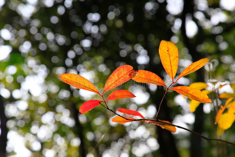 在秋季期间,结束后面叶子那改变肤色 图库摄影