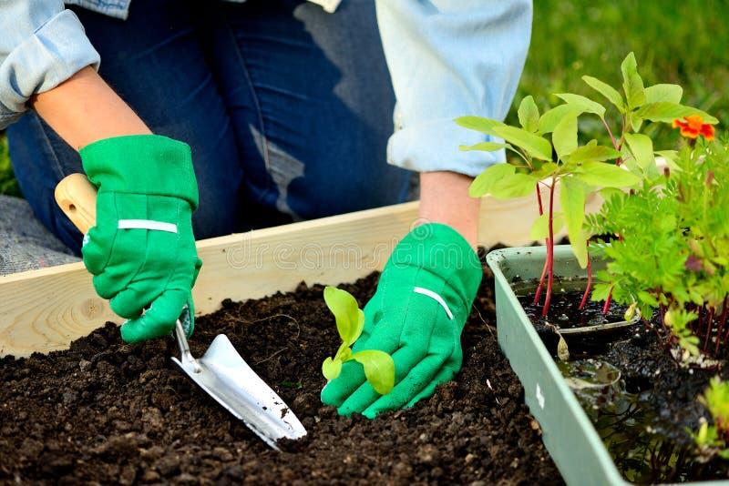 在种植新芽的手套的特写镜头手 免版税库存照片