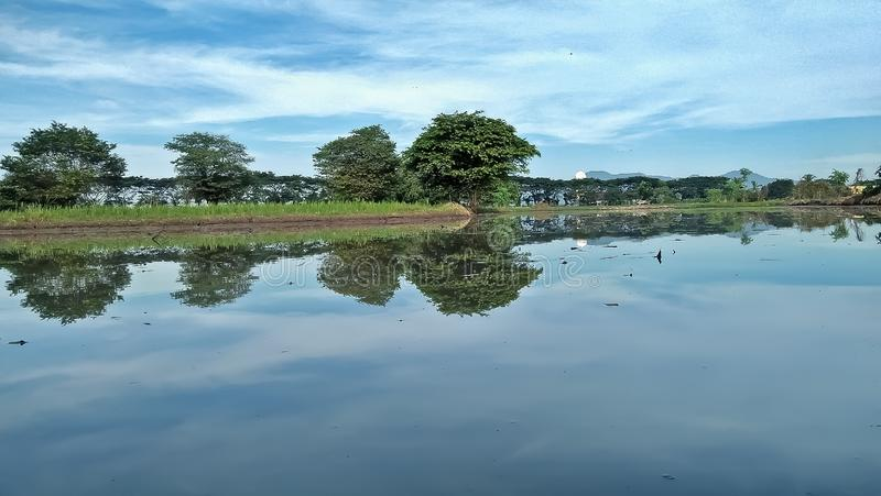 在种植米前的米领域 库存照片