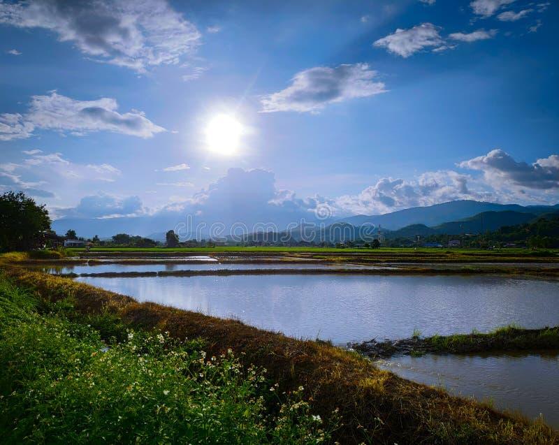 在种田前的米领域 免版税库存照片