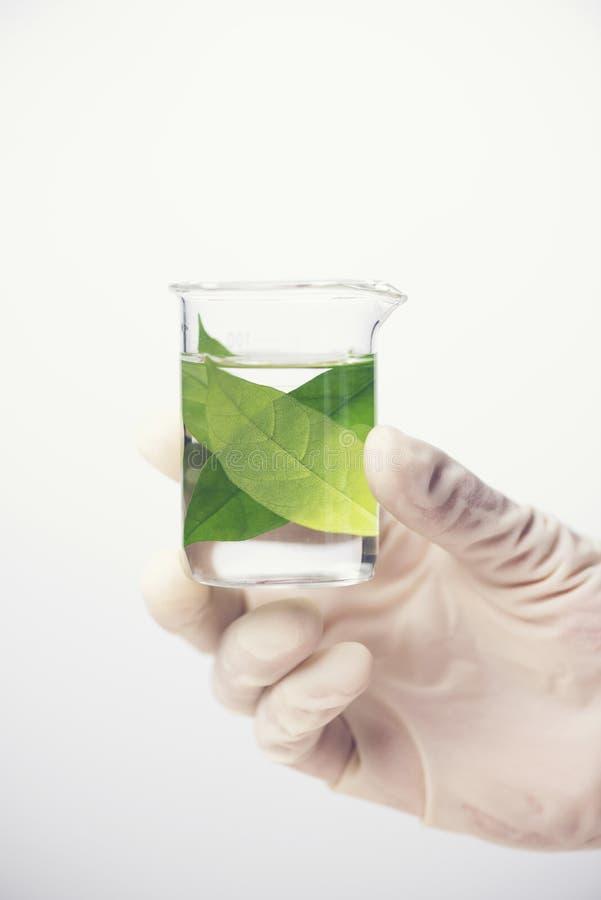 在科学实验室玻璃器皿的化工液体白色背景的 图库摄影