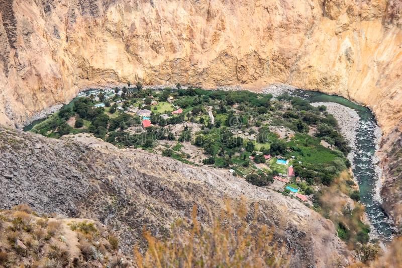 在科尔卡峡谷秘鲁的绿洲 库存图片