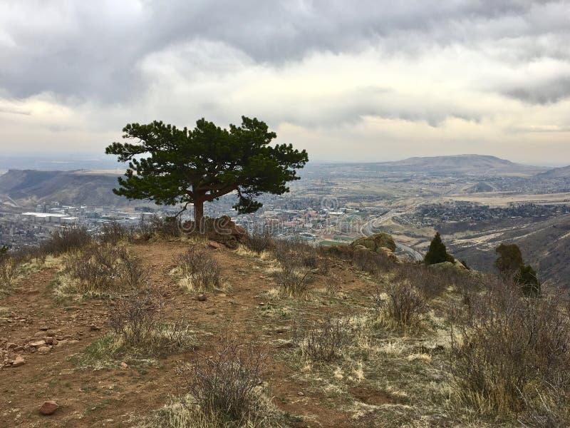 在科罗拉多山的峰顶的一棵孤立树 库存图片