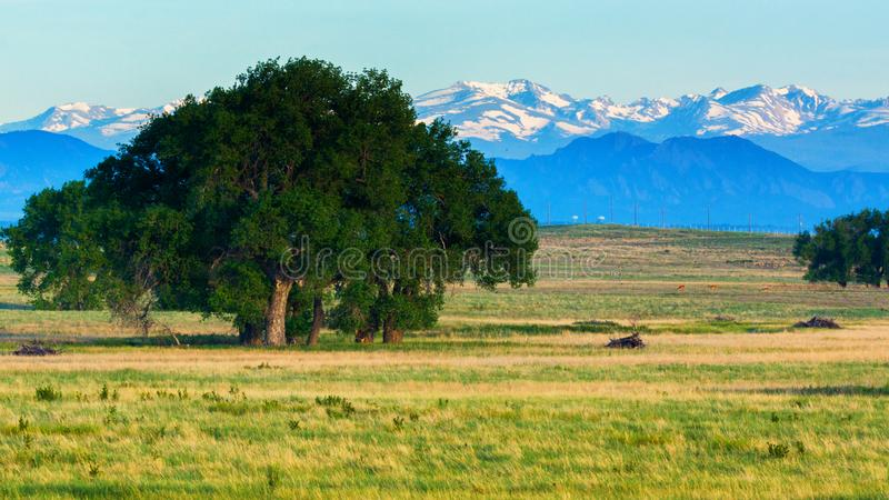 在科罗拉多平原的夏天早晨 免版税库存照片