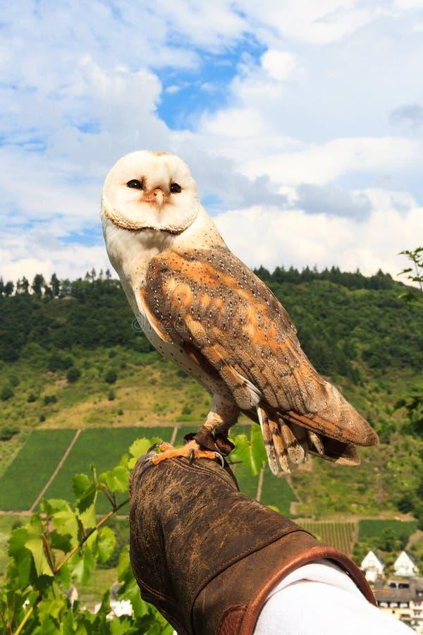 在科赫姆城堡的猎鹰训练术 免版税库存照片