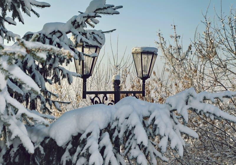 在积雪的冷杉分支的路灯柱在冬天 库存图片