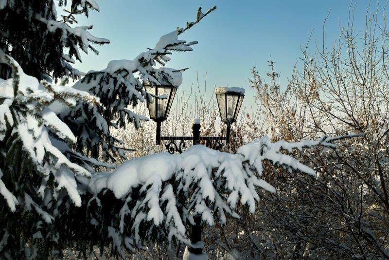 在积雪的冷杉分支的路灯柱在冬天 免版税库存图片