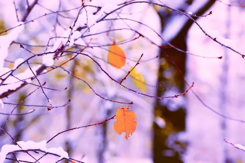 在积雪的分支的偏僻的黄色叶子 免版税库存图片