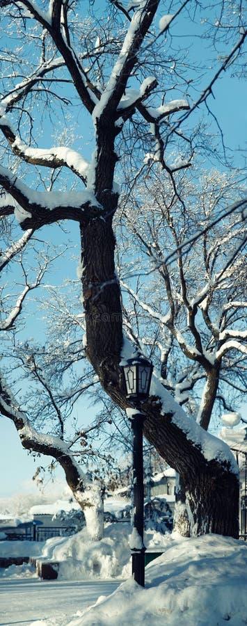 在积雪的树背景的路灯柱  库存照片