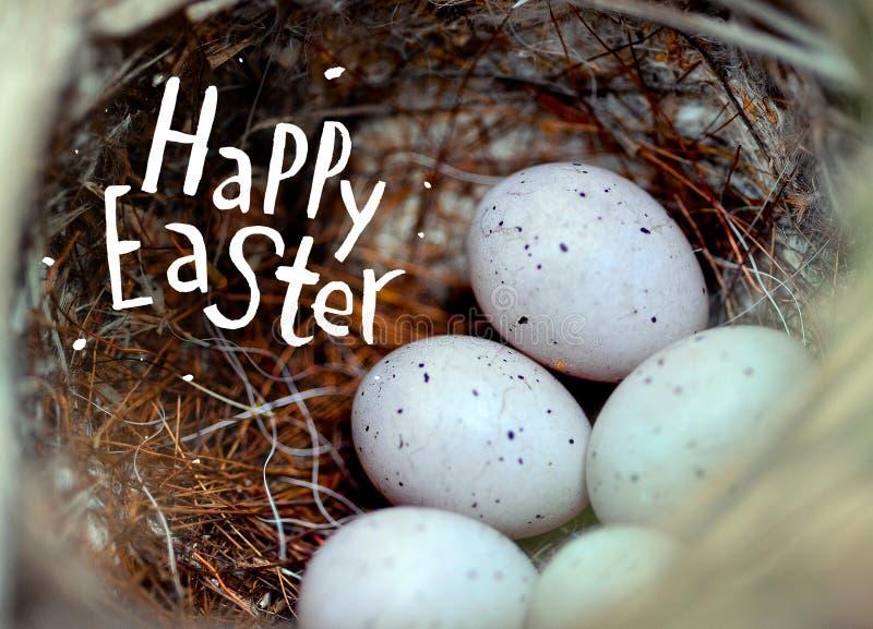 在秸杆的真正的小的鸡蛋筑巢复活节的概念 题字复活节快乐 选择聚焦 免版税库存图片