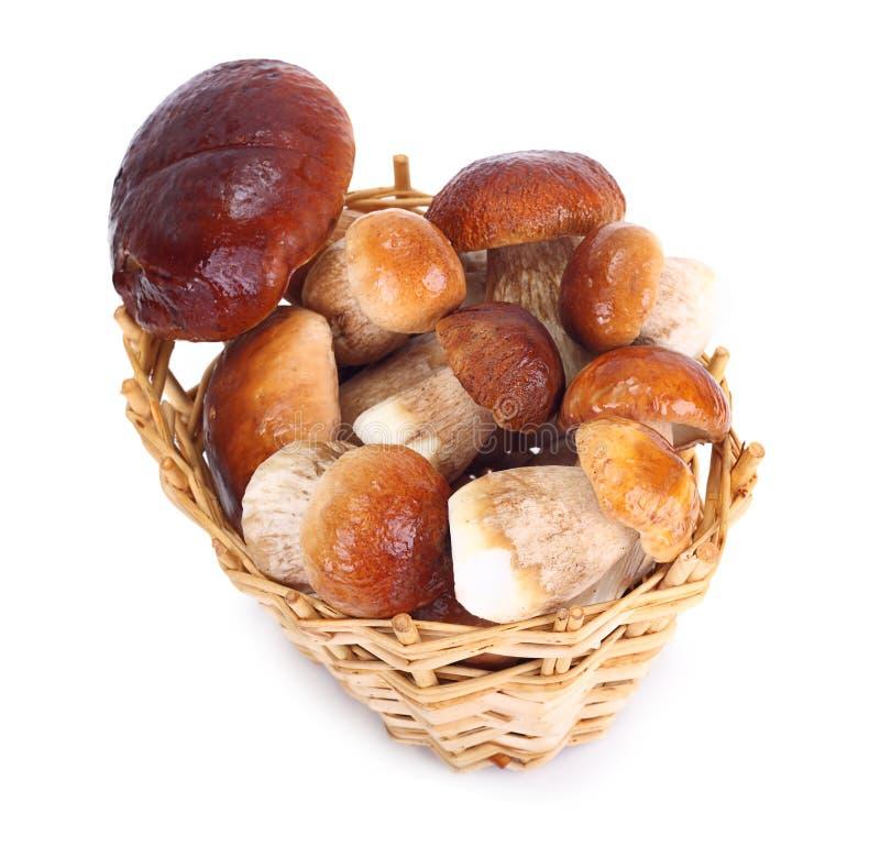 在秸杆篮子的牛肝菌蕈类可食蘑菇 免版税库存图片