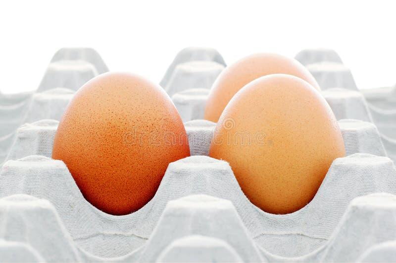 在程序包的鸡蛋 库存图片