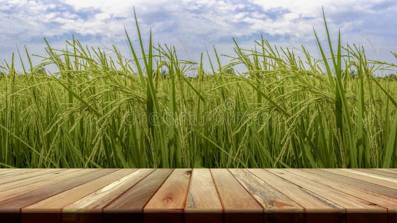 在稻田前面的透视褐色木板空的桌在早晨时间 对产品安置或编辑您的产品 免版税库存照片