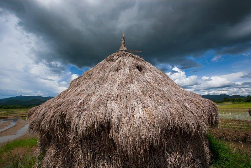 在稻田的老秸杆,多云来临 绿色领域和trop 库存照片