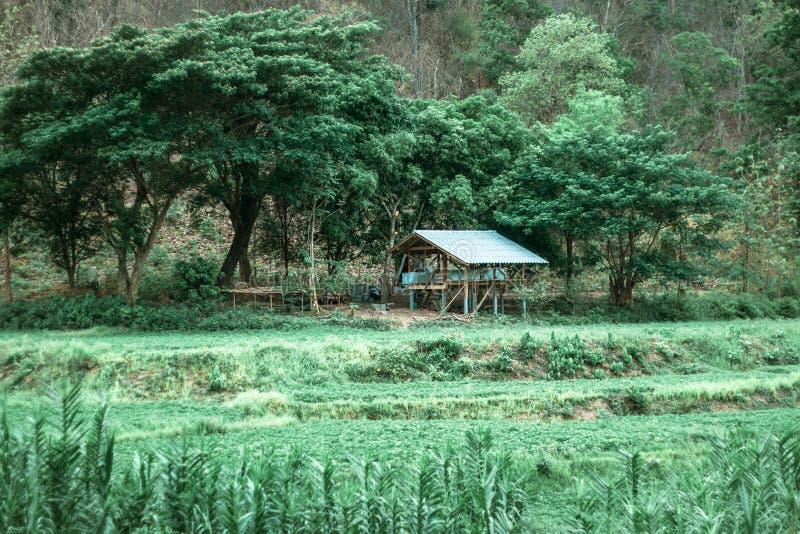 在稻的木小屋和米调遣本质上,葡萄酒背景 库存图片