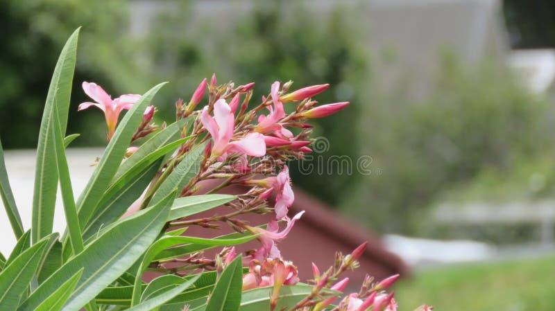 在空气花开花的叶子 免版税图库摄影