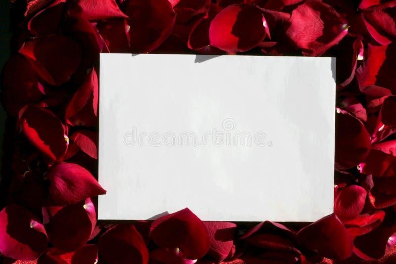 在空白纸红色的玫瑰 免版税库存照片