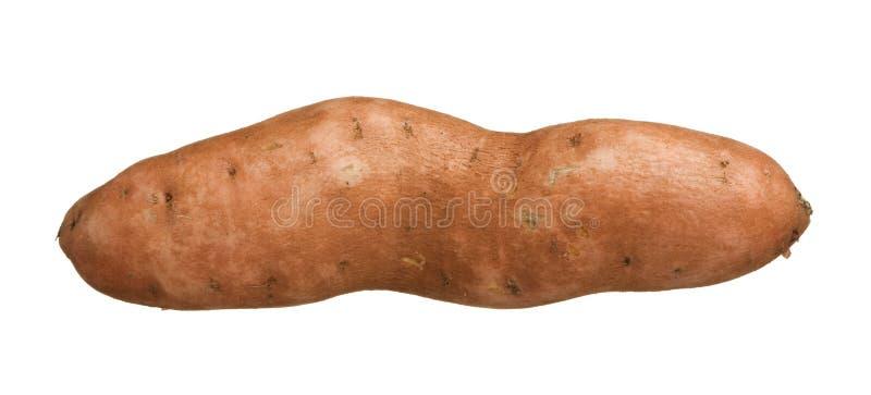 在空白背景查出的白薯薯类,特写镜头 库存图片