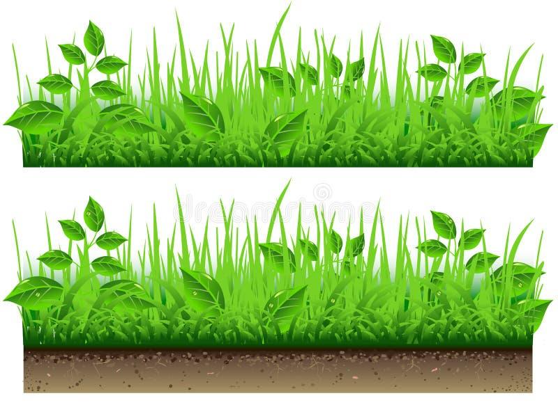 在空白背景查出的草边界 向量例证