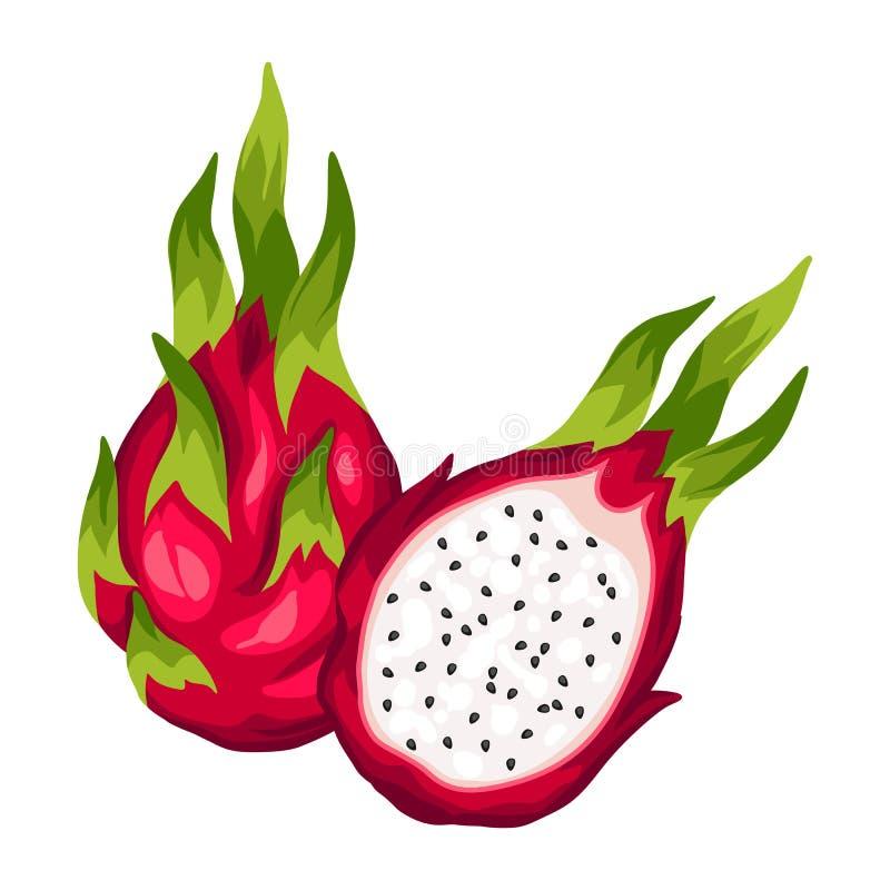 在空白背景查出的龙果子 热带植物的例证 向量例证