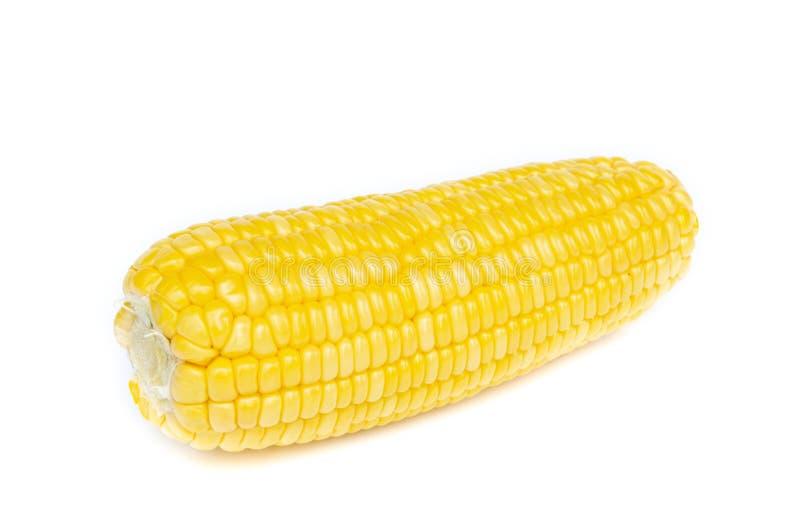 在空白背景的新鲜的玉米 免版税库存图片