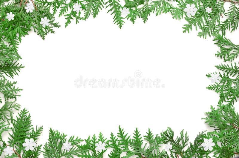 在空白背景的杉树分行 顶视图 库存照片