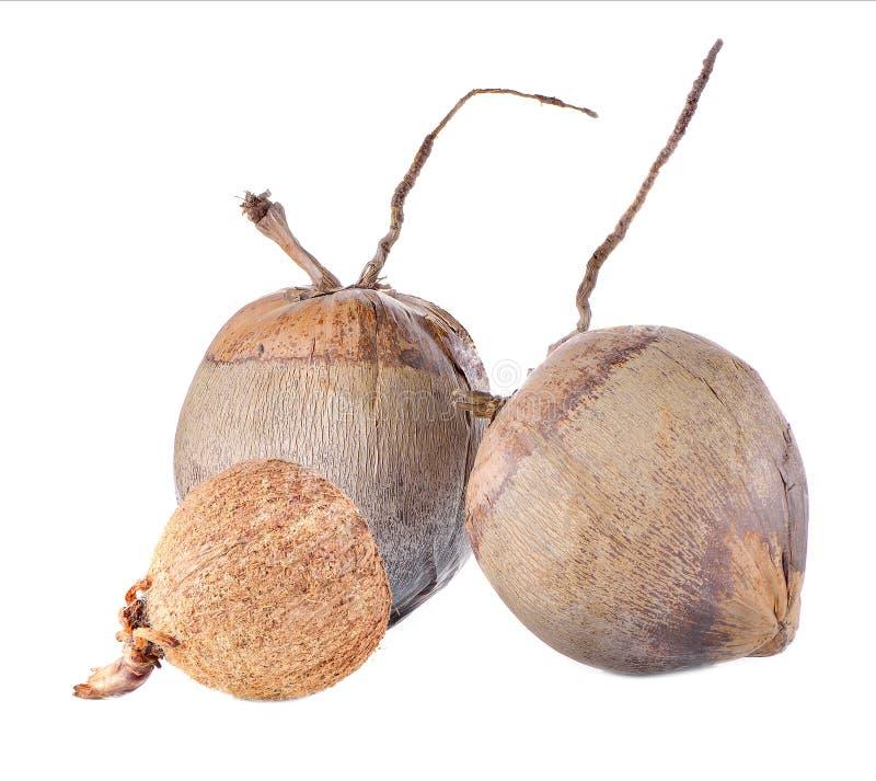 在空白背景的椰子 免版税库存图片
