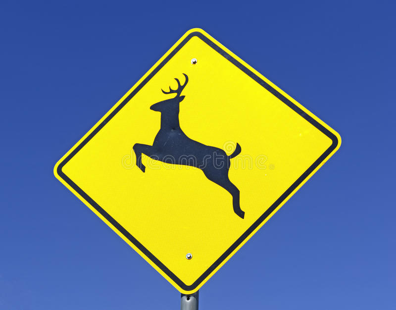 在空的路的鹿横渡的警报信号 免版税库存图片