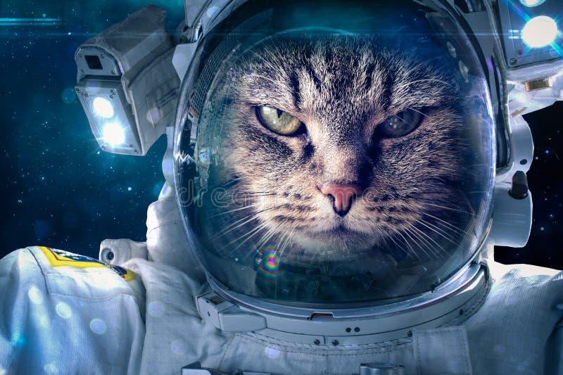 在空间的猫 免版税库存照片