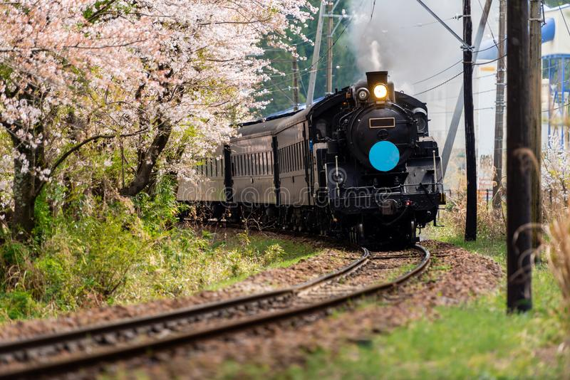 在穿过樱花的铁路的火车 库存照片