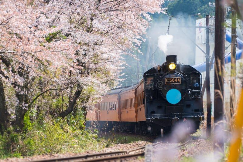 在穿过樱花的铁路的火车 库存图片