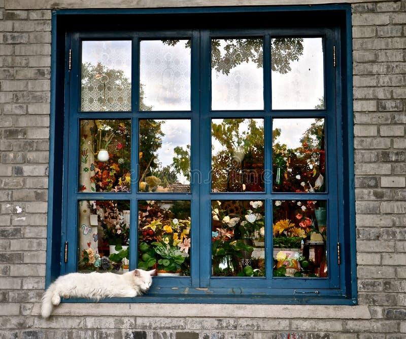 在窗口壁架的猫 免版税图库摄影
