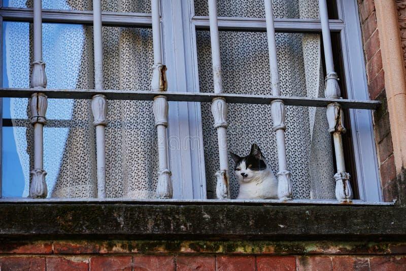 在窗口的好奇猫 免版税库存照片