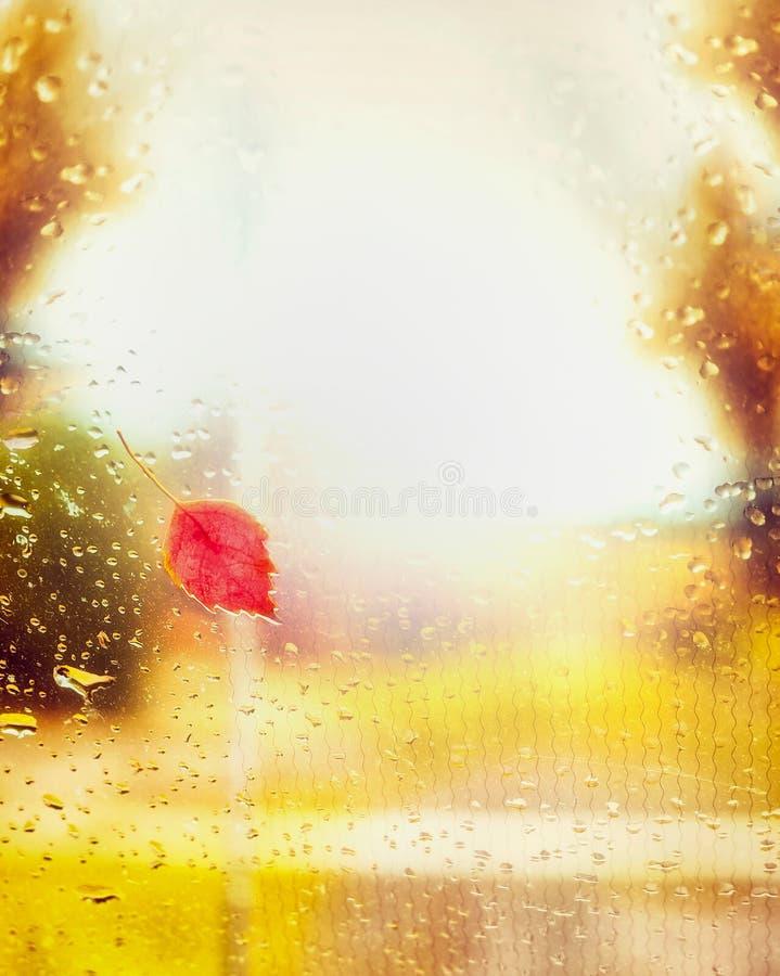 在窗口的红色秋天叶子与雨滴下 库存照片