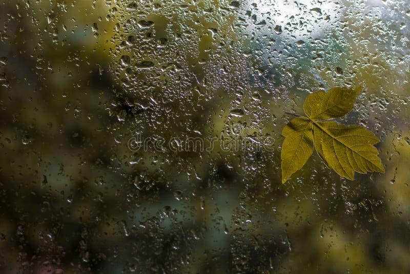 在窗口的雨与叶子 免版税库存图片