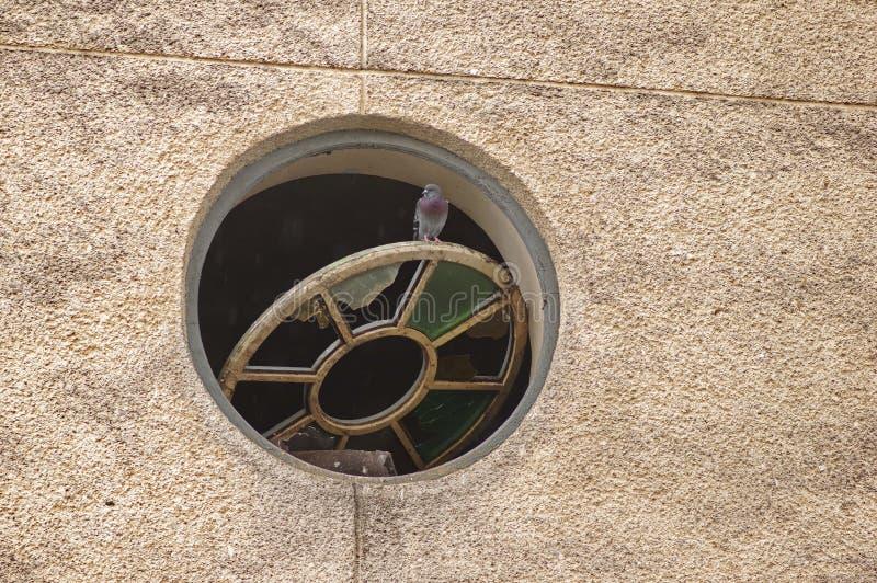 在窗口的鸽子 免版税库存图片